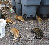 community cats eating